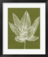 Framed Monochrome Tulip VI