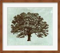 Framed Spa Tree I