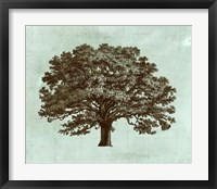 Framed Spa Tree I