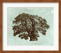 Framed Spa Tree II