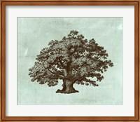 Framed Spa Tree III