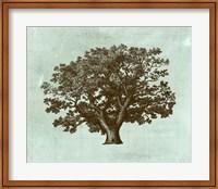 Framed Spa Tree IV