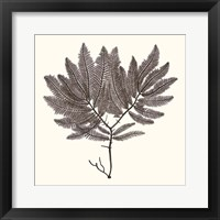 Seaweed Collection I Framed Print