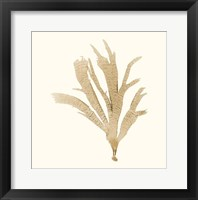 Seaweed Collection IV Framed Print