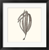 Seaweed Collection V Framed Print