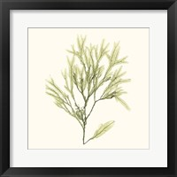 Seaweed Collection VII Framed Print