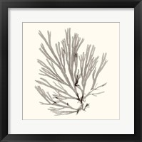 Seaweed Collection IX Framed Print