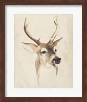 Framed Watercolor Animal Study IV