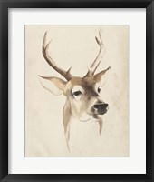 Framed Watercolor Animal Study IV