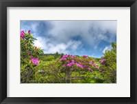 Framed Carver's Rhododendron