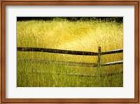 Framed Sea of Grass