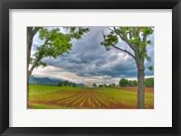 Framed dillow corn field