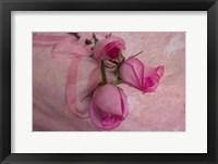 Framed Rose & Ribbons