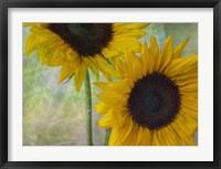 Framed Big Sunflowers