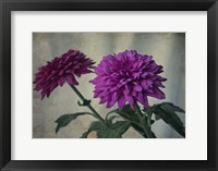 Framed Two Purple Mums