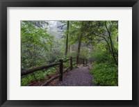 Framed Misty Trail