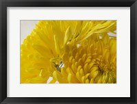 Framed Cremon Yellow Flowers
