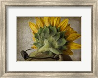 Framed Sunflower With Handle