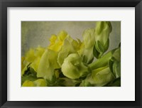 Framed Yellow Snapdragons