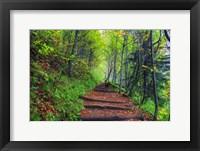 Framed Appalachian Trail 3