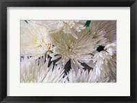 Framed Blooming White