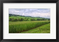 Framed Boone's Cornfield