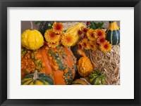 Framed Bumpy Pumpkins