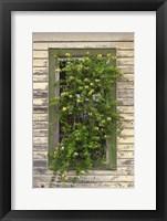 Framed Window Flowers