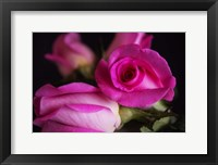 Framed Attache Roses
