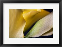 Framed Calla Lillies II