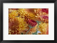 Framed Flaming Fall Mums