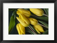 Framed Yellow Tulips in Spring