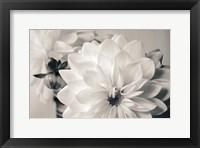 Framed White Beauty BW