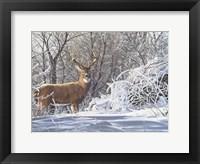 Framed Winter Whitetail