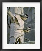 Framed Chickadees At Dawn