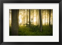 Framed Mystic Forest
