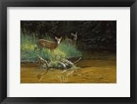 Framed Fawn Brook