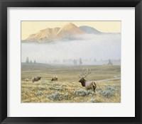 Framed Autumn Elk