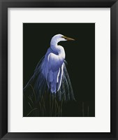 Framed Common Egret In Breeding Plumage