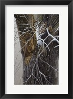 Framed Winter Branches