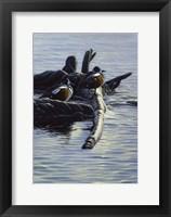 Framed Harlequin Ducks
