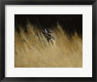 Framed Misty Morning Sentinal