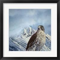 Framed Gyr Falcon
