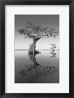 Framed Trees at Lake 2