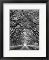 Framed Oaks Avenue 2 BW
