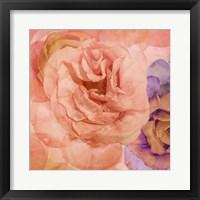 Framed Rosa Cuadrada