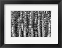 Framed Old Cactus 2