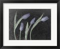 Framed Tulipanes Azules