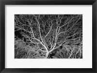 Framed Costa Rica Tree