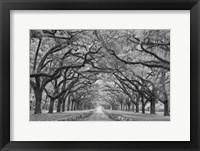 Framed Oaks Avenue 1 BW